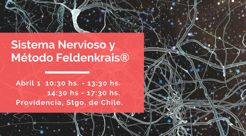 Sistema Nervioso y Método Feldenkrais (4).png