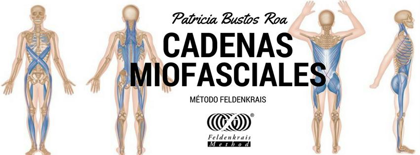 cadenas miofasciales.png